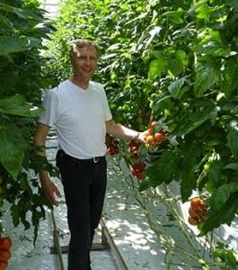 Friedrich Hermanns integrierter Tomatenanbau