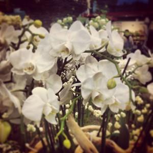 Blumen Holland Grüne Woche